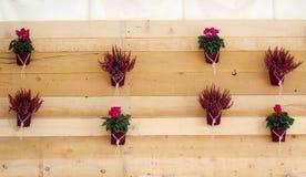 Parete rustica di legno decorata con i fiori viola conservati in vaso immagini stock
