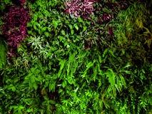 Parete variopinta della vegetazione del fondo delle piante Fotografia Stock Libera da Diritti