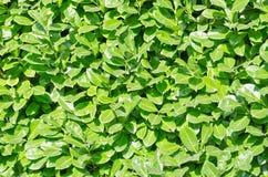 Parete verde Immagine Stock