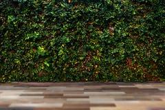 Parete verde della foglia con il pavimento di legno fotografie stock libere da diritti