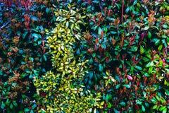 Parete verde naturale della foglia Fiori verdi variopinti della barriera in primavera Modello del fondo di struttura Immagine Stock
