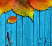 Parete verniciata di legno coperta da un certo permesso di autunno Immagini Stock Libere da Diritti