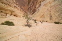 Pareti di canyon convergenti nella valle di fuoco Nevada Fotografia Stock Libera da Diritti