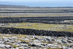 Pareti di pietra dell'isola dell'Irlanda Aran Fotografie Stock Libere da Diritti
