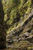 Pareti di un canyon del fiume, altopiani di Fijiian Fotografia Stock
