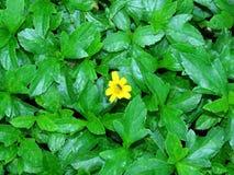 Parezca bajo a las hojas de plantas Flores y abejas Fotografía de archivo