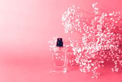 Parfümieren Sie Glas mit Gypsophila um korallenrote Farbe lizenzfreie stockbilder
