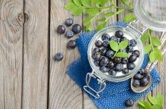 Parfait югурта с granola и свежими голубиками, здоровой концепцией завтрака Стоковые Изображения