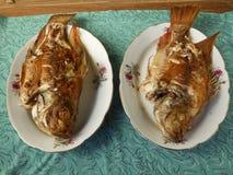 Parfiskförälskelse Arkivfoton