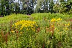 Parfumé épicé d'usines sauvages et floraison dans diverses couleurs Photos stock