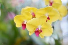 Parfumés puants de bouquet jaune d'orchidée détendent Images libres de droits