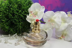 Parfum Stock Fotografie