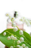 parfum de Liliy-de-le-vallée Photos libres de droits