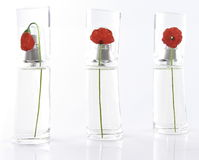 Parfume battle. S with roses on white Stock Images