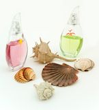 Parfume with shells. On the white background stock image