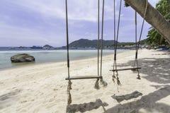 Pargungor på sanden Arkivfoton