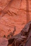Paria点, Kolob,锡安国家公园,犹他的手指峡谷的北部面孔 免版税库存照片