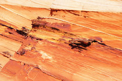 Paria canion-Vermiljoenen Klippenwildernis, Arizona, de V.S. Stock Afbeelding