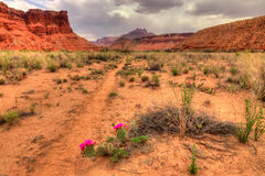 Paria Canyon. The Paria Canyon is located in Arizona and Utah, and is a 38 mile long canyon trip by means of backpacking.  One makes thousands of stream Royalty Free Stock Photos