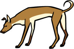 Pariah Dog. Vector illustration an Indian pariah dog Royalty Free Stock Images