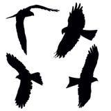 Pariah kite. Flying pariah, or black kite, set of the black vector silhouettes Royalty Free Stock Photo