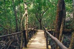 Paridade densa do nacional de Tanzânia Zanzibar Jozani da floresta da ponte de madeira fotos de stock