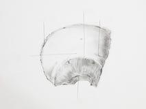 Parietal bones pencil drawing royalty free stock images