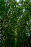 Parigi, Francia 1° giugno 2015: Giardini di fama mondiale di Versaille con le sue disposizioni verdi magnificient Immagini Stock Libere da Diritti