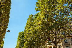 PARIJS, FRANKRIJK - AUGUSTUS 30, 2015: Champs Elysée in de zomertijd Parijs - Frankrijk Stock Foto