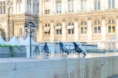 Parijs ziet de hittegolf onder ogen royalty-vrije stock fotografie