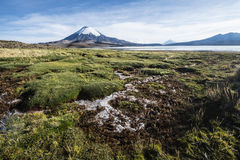 Parinacota Volcano, Chile Stock Images