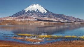 Parinacota volcano and Chungara lake, Lauca National Park, Chile. Parinacota volcano and Chungara lake at a height of 4500 mt., Lauca National Park, Chile Stock Photos