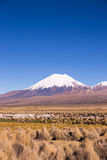 Parinacota volcano. High Andean landscape in the Andes. Royalty Free Stock Images