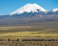 Parinacota volcano. High Andean landscape in the Andes. High Andean tundra landscape in the mountains of the Andes. The weather Andean Highlands Puna grassland stock images