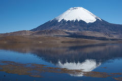 Parinacota Volcano. Snow capped Parinacota Volcano, 6,324m high, reflected in Lake Chungara in the Altiplano of northern Chile Stock Photos