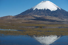 Parinacota Volcano. Snow capped Parinacota Volcano, 6,324m high, reflected in Lake Chungara in the Altiplano of northern Chile Royalty Free Stock Photography