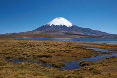 Parinacota Volcano Stock Images