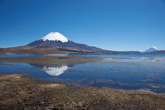 Parinacota Volcano Stock Image