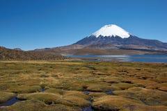 Parinacota Volcano. Snow capped Parinacota Volcano, 6,324m high, towering over Lake Chungara in the Altiplano of northern Chile Stock Photos