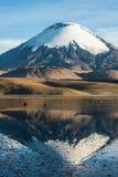 Parinacota vulkan, Chile-Bolivia arkivfoto