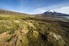 Parinacotavulkaan in Meer Chungara, Chili wordt weerspiegeld dat Stock Foto
