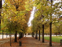 Paris in Autumn. Regimented Trees in a Parisian Park in Autumn Royalty Free Stock Photography