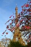 Paris blomningar Royaltyfri Fotografi
