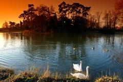 paris för stadsdaumesnilslake swan royaltyfri fotografi