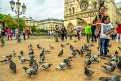 Pigeons eating at Notre Dame royalty free stock image