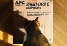 Curious cat inspecting APC Smart-UPS battery. PARIS, FRANCE - MAR 29, 2018: Curious cat inspecting APC Smart-UPS C 1000VA LCD 230V enterprise-level Stock Image