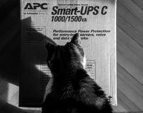 Curious cat inspecting APC Smart-UPS battery. PARIS, FRANCE - MAR 29, 2018: Curious cat inspecting APC Smart-UPS C 1000VA LCD 230V enterprise-level Stock Photos