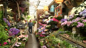 Paris, France, 20 May 2019 - The flower market in Paris located on the Ile de la Cite, between the Notre-Dame Cathedral. And Sainte-Chapelle chapel, 4k footage stock footage
