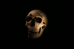 Paris, France. 02.25.2016. Original skull of a caveman exhibited for the first time in the new Paris Museum of Man Royalty Free Stock Images
