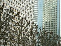 Paris Frankrike: April 13, 2007: Träd med moderna byggnader Arkivfoto